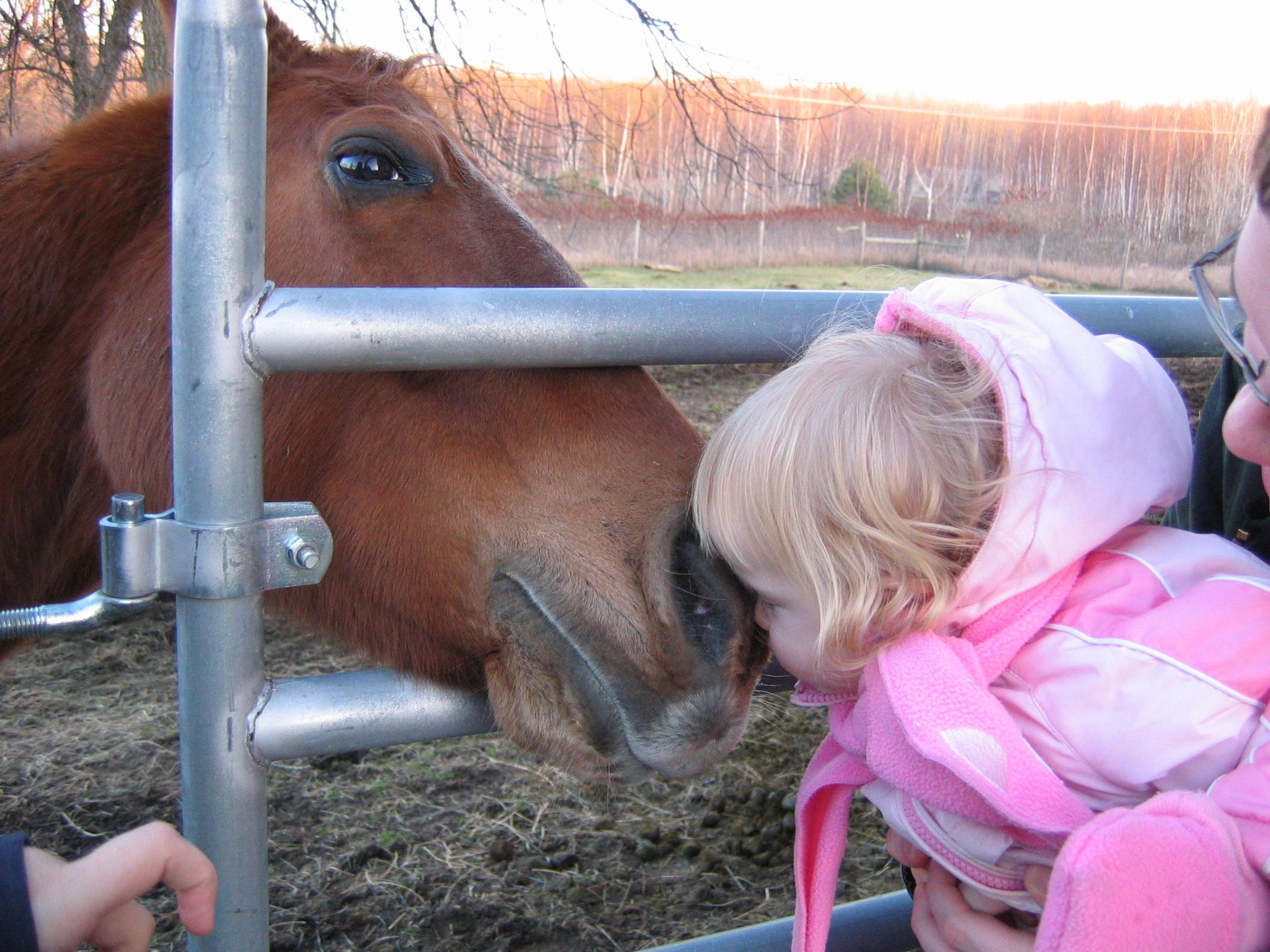 horse kiss!